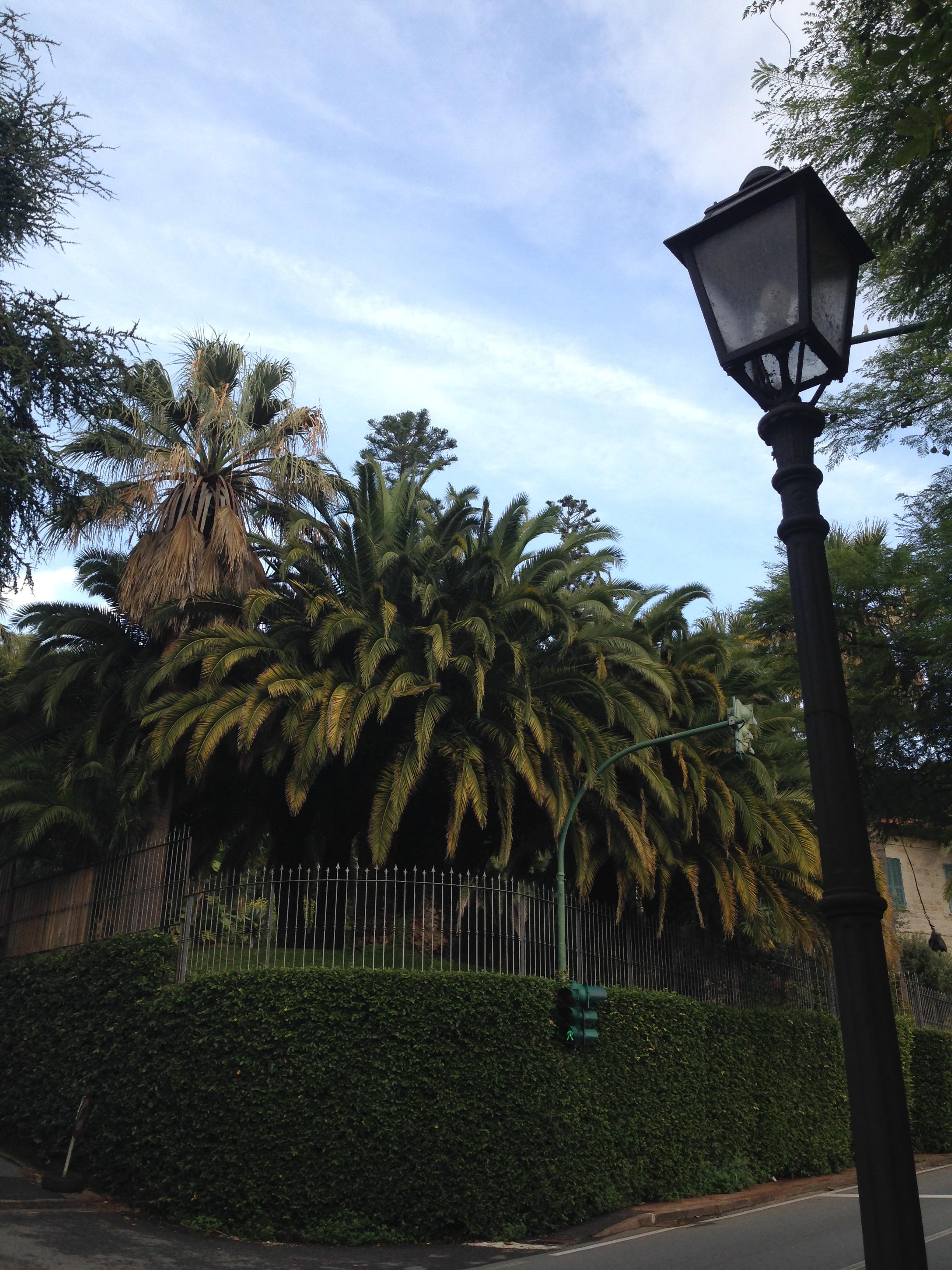 Ancora palme. More palm trees.